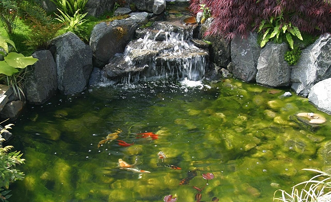Many of our ponds have fish in them as part of the natural ecosystem.