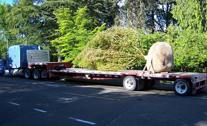The day of 'Maggie's' tree delivery.
