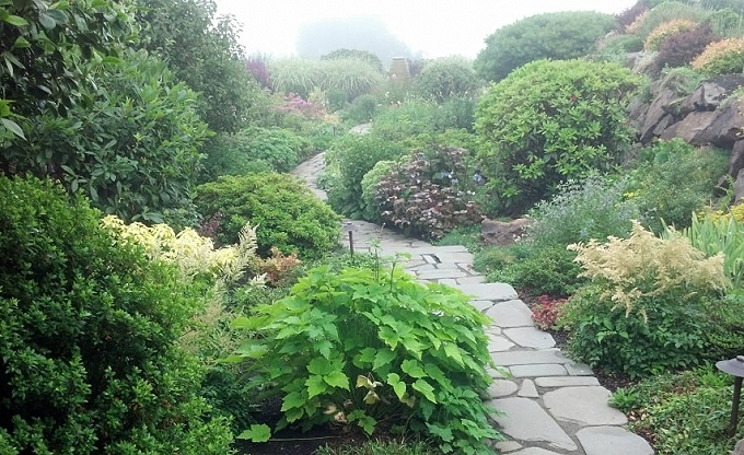 Garden path in mid-summer, 2012.Two years after installation. Magnolia garden.