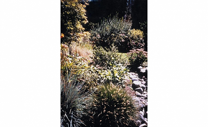 A dry stream, grasses and perennial garden setting.