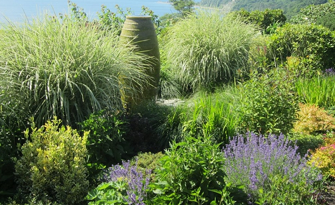 Two years after installation. 'Colossus' water feature, miscanthus. Summer.