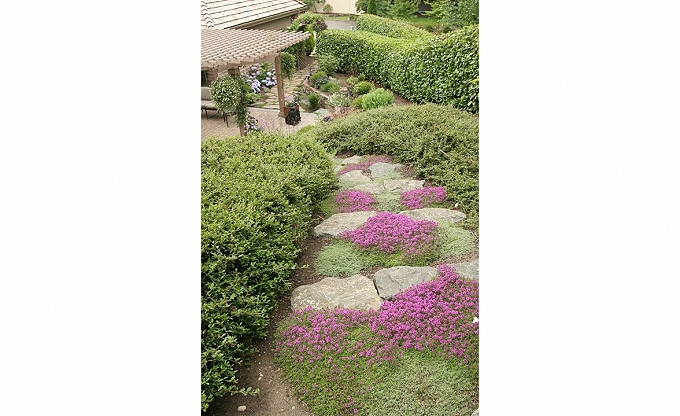Rustic stone steps, viewing to patio below. Inplanted with thyme and other 'stepable' groundcovers. Trepanier residence, Hunters Glen, Redmond.