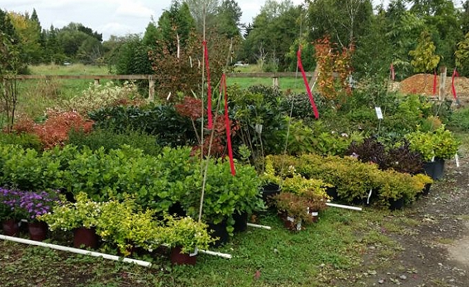 A portion of the select shrubs being held at the nursery for upcoming projects....