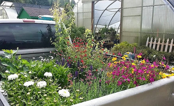 Don is unloading plants from a weekly plant run at the nursery - preparing for a landscape client appointment on a weekend...